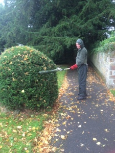 "Neil trimming yew ""puddings"" (in the rain!)"